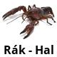 Rák-hal