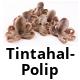Tintahal - Polip
